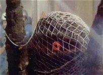 Monster net
