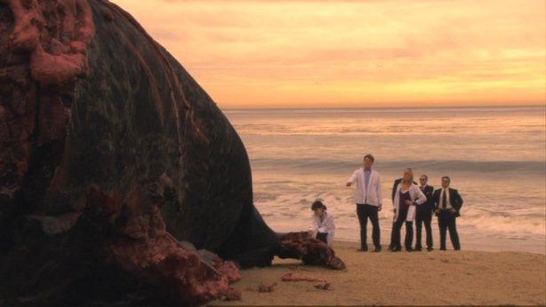 Whale carcass
